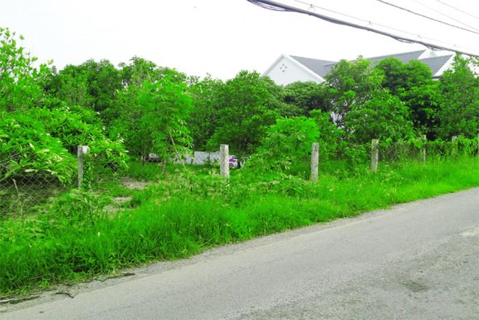 Cần bán 1700m2 đất Phong Phú Bình Chánh -Bán 1700m2 đất mặt tiền đường 8m
