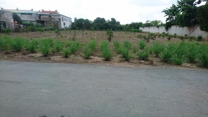 Đất nhà vườn, biệt thự, kho xưởng 303 m2 mặt tiền đường nhựa 30m - Hưng Long - Bình Chánh