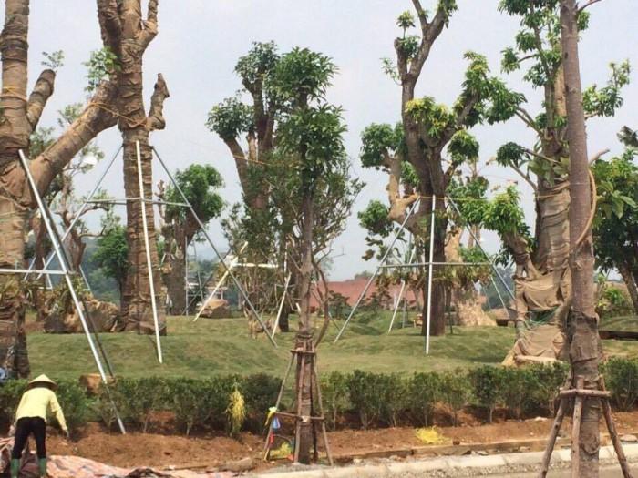 Bán Đất Nền Biệt Thự Phú Cát City CK 6%, Cạnh Khu CNC Láng Hòa Lạc