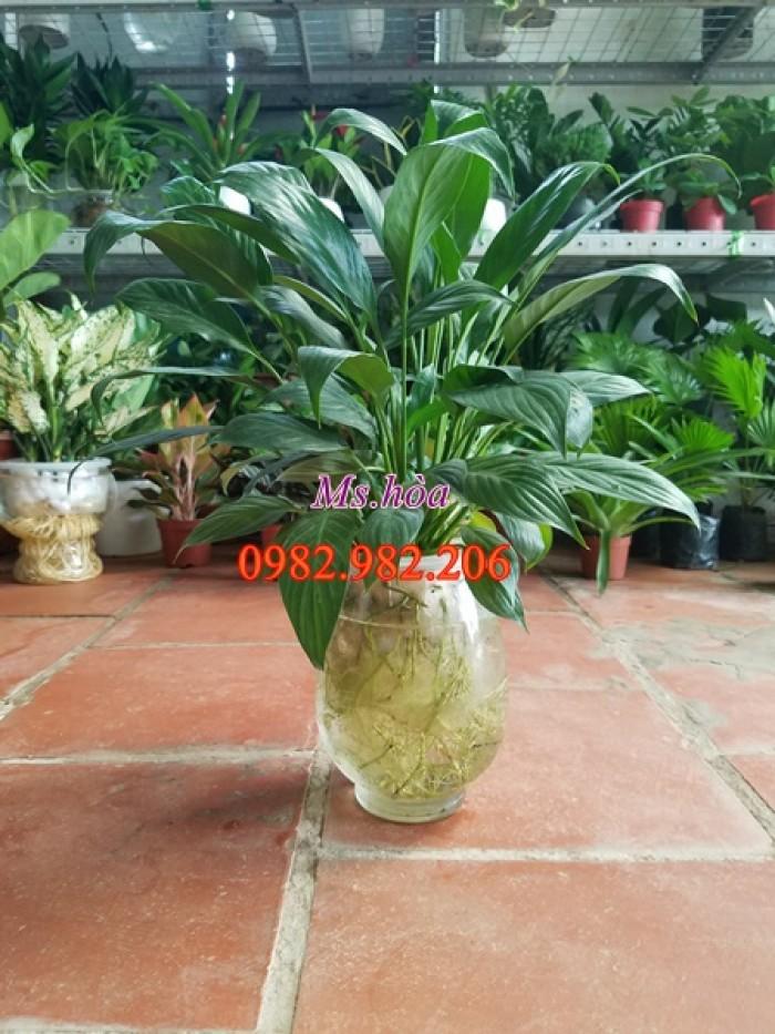 Cây thủy sinh để bàn với vẻ đẹp lãng mạn, sang trọng, đẹp từ thân, rễ, cành, lá1