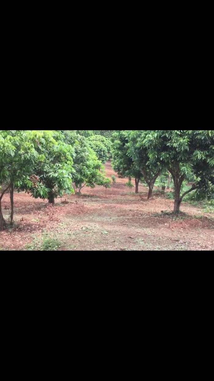 Bán đất bản Quyết Thắng - Chiềng Khương- Sông Mã - Sơn La
