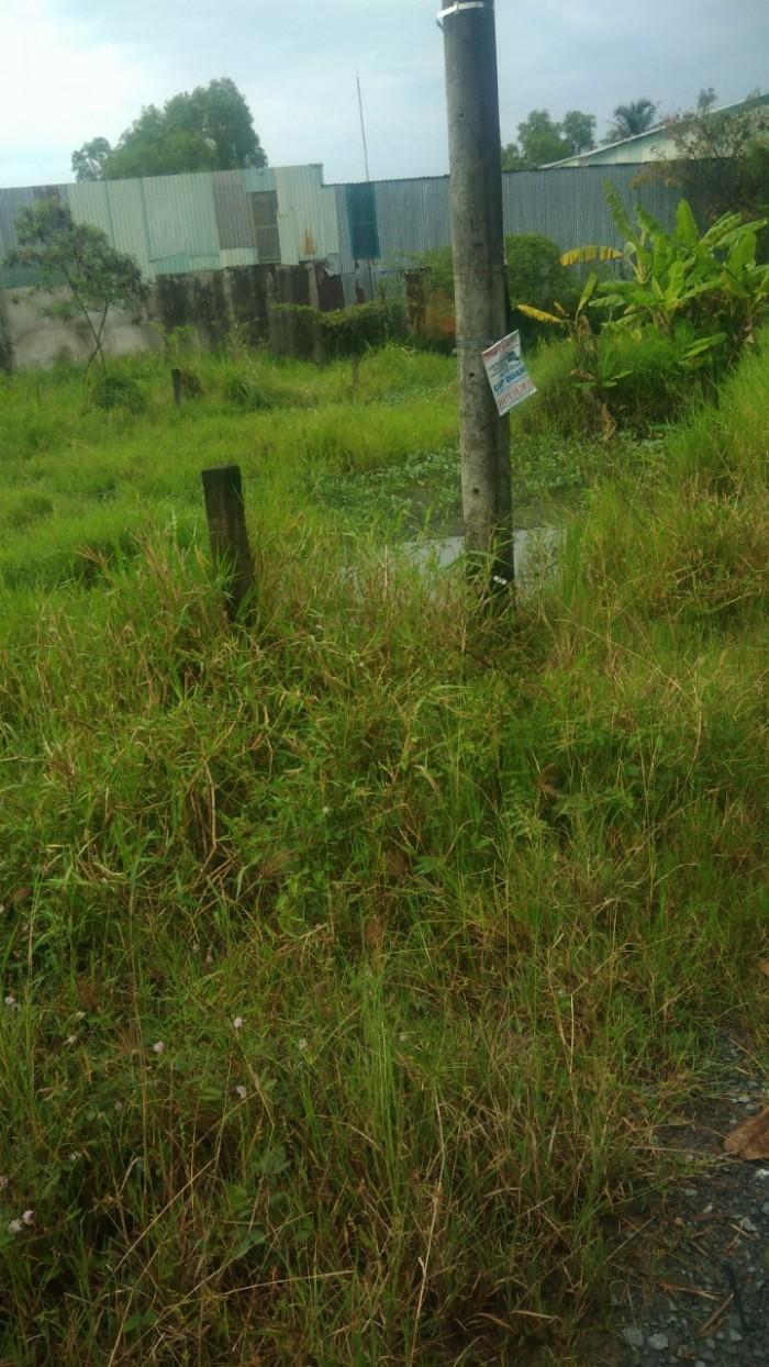 Gia đình kẹt tiền bán gấp 1266m2 đất đường nhánh Quy Đức, Bình Chánh.