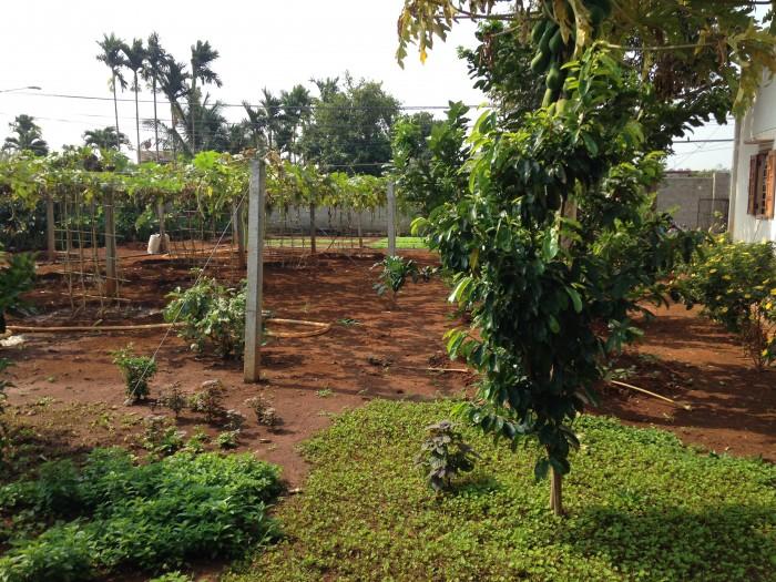 Bán trang trại nghỉ dưỡng cực đẹp phường thành nhất – TP. Buôn Ma Thuột