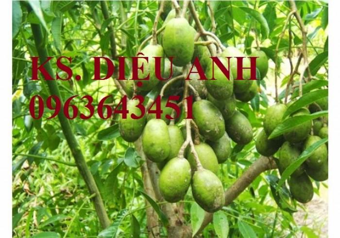 Chuyên sỉ, lẻ cây giống: giống cóc Thái Lan, cóc bao tử, cây cóc giống, giao cây toàn quốc, hỗ trợ kỹ thuật5