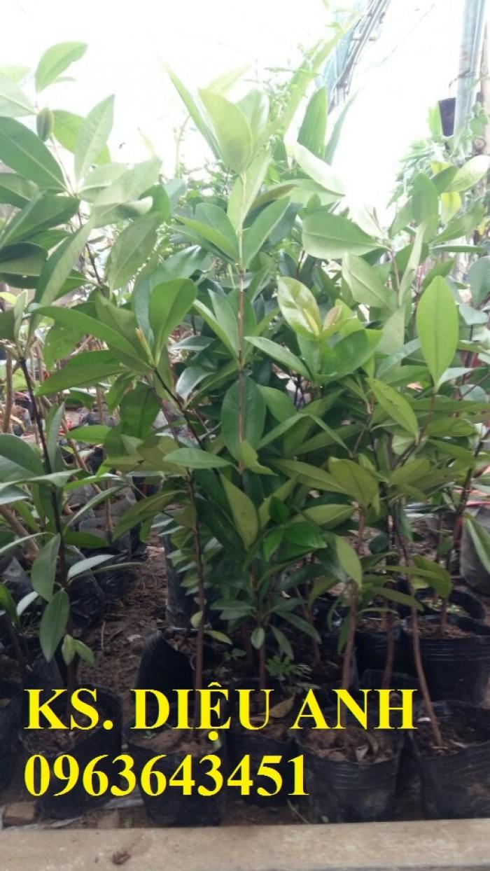 Chuyên cây giống cherry: cherry anh đào, cherry Úc, cherry Brazil, cherry nhiệt đới, cherry Mỹ chuẩn7