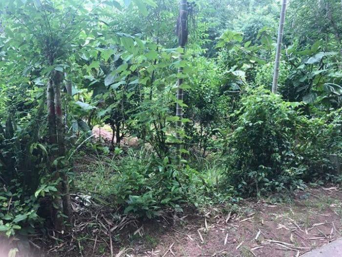 Sở hữu ngay lô đất đẹp tại kiệt Lê Ngô Cát, Tp Huế