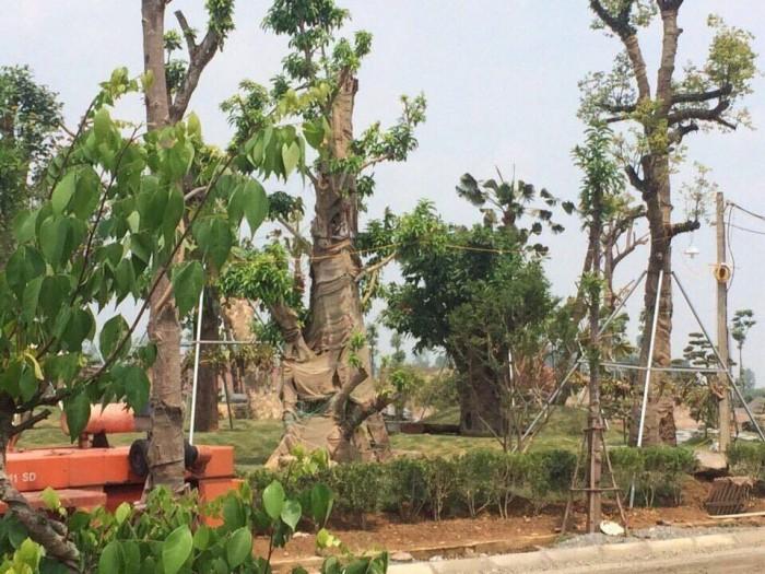 Bán Đất Nền Biệt Thự Phú Cát City 9tr/m2 CK 6%, Tặng 100tr Nội Thất