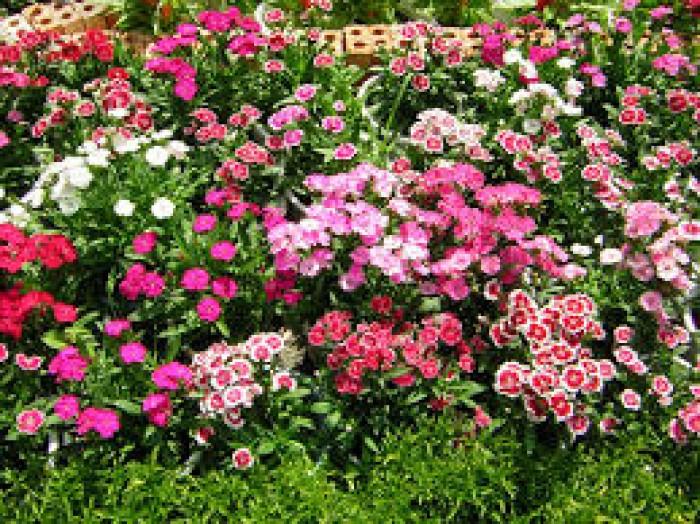 Nhà Vườn Liền Kề Dahlia Homes (St5) - Bông Thược Dược Giữa Khu Vườn Gamuda Gardens
