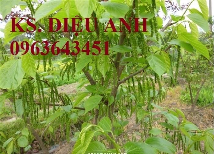 Chuyên cung cấp cây giống dâu: dâu quả dài, dâu trái dài Đài Loan4