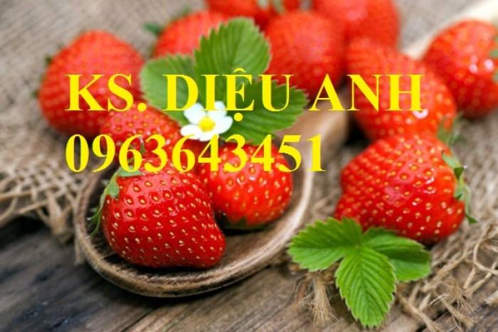 Chuyên cung cấp cây giống dâu: dâu quả dài, dâu trái dài Đài Loan15