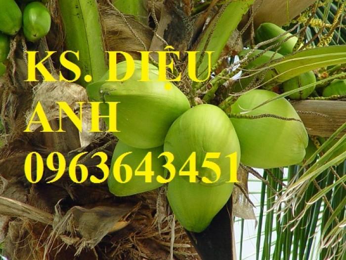 Chuyên cung cấp cây giống dừa: dừa xiêm xanh lùn, dừa xiêm dứa, dừa xiêm xanh, dừa lục, dừa đỏ, dừa lửa.0