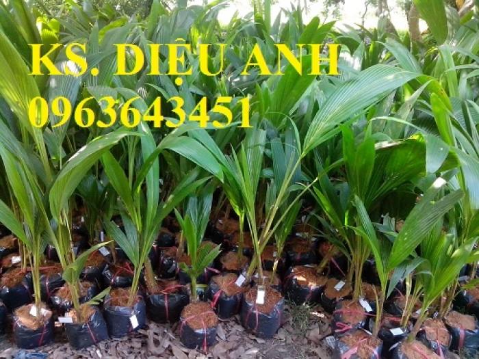 Chuyên cung cấp cây giống dừa: dừa xiêm xanh lùn, dừa xiêm dứa, dừa xiêm xanh, dừa lục, dừa đỏ, dừa lửa.1
