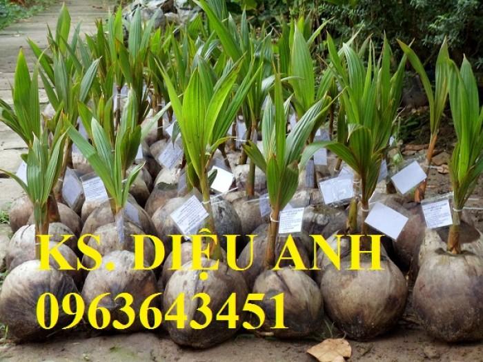 Chuyên cung cấp cây giống dừa: dừa xiêm xanh lùn, dừa xiêm dứa, dừa xiêm xanh, dừa lục, dừa đỏ, dừa lửa.2