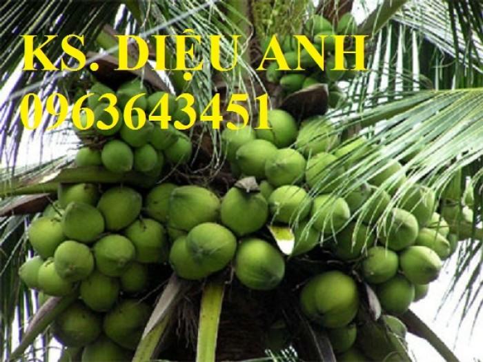 Chuyên cung cấp cây giống dừa: dừa xiêm xanh lùn, dừa xiêm dứa, dừa xiêm xanh, dừa lục, dừa đỏ, dừa lửa.3