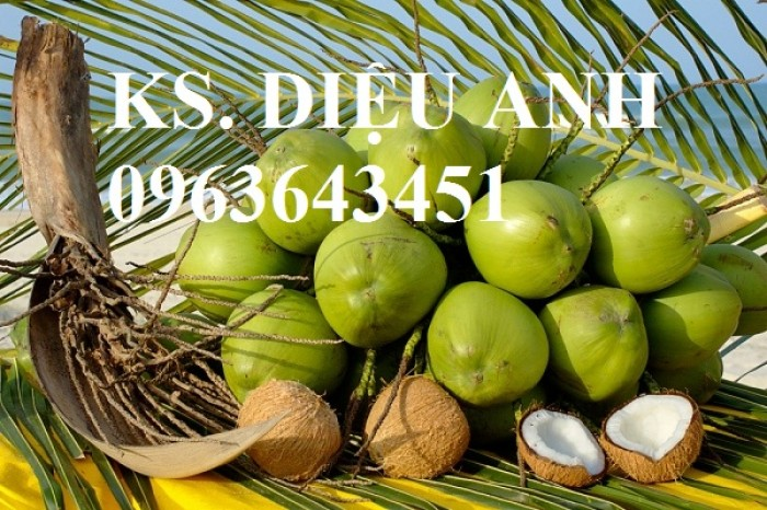 Chuyên cung cấp cây giống dừa: dừa xiêm xanh lùn, dừa xiêm dứa, dừa xiêm xanh, dừa lục, dừa đỏ, dừa lửa.4
