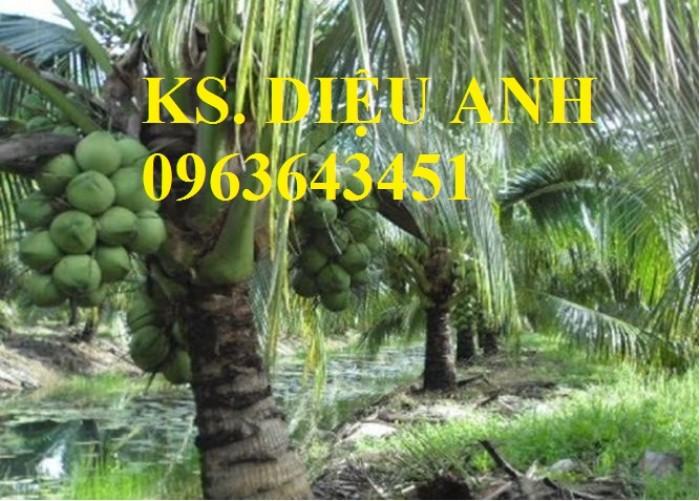 Chuyên cung cấp cây giống dừa: dừa xiêm xanh lùn, dừa xiêm dứa, dừa xiêm xanh, dừa lục, dừa đỏ, dừa lửa.5
