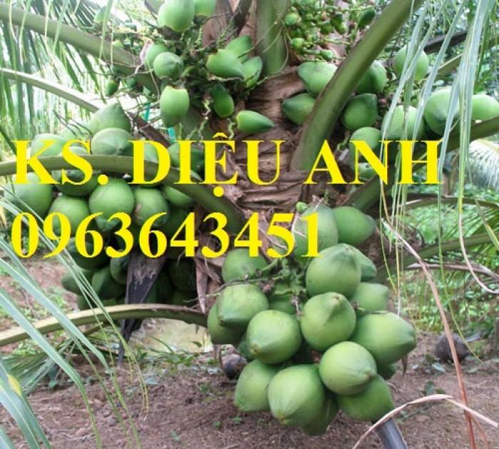 Chuyên cung cấp cây giống dừa: dừa xiêm xanh lùn, dừa xiêm dứa, dừa xiêm xanh, dừa lục, dừa đỏ, dừa lửa.6