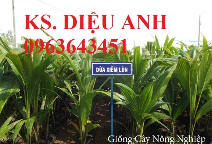 Chuyên cung cấp cây giống dừa: dừa xiêm xanh lùn, dừa xiêm dứa, dừa xiêm xanh, dừa lục, dừa đỏ, dừa lửa.7