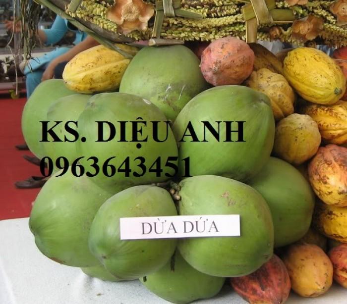 Chuyên cung cấp cây giống dừa: dừa xiêm xanh lùn, dừa xiêm dứa, dừa xiêm xanh, dừa lục, dừa đỏ, dừa lửa.12