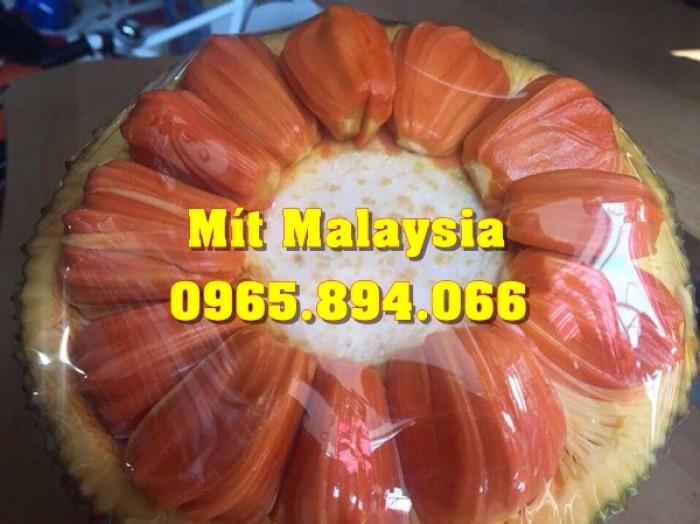 Mít Malaysia, Mít Trái Dài, Mít Cao Sản - Học Viện Nông Nghiệp7