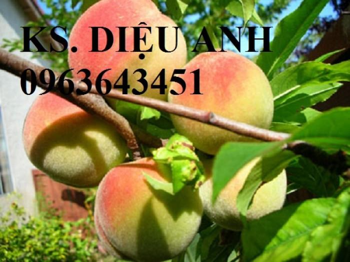 Chuyên cung cấp cây giống đào ăn quả, đào bát tiên, đào đỏ, đào quả đỏ nhập khẩu, uy tín2