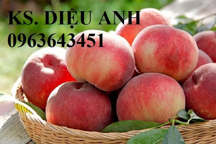 Chuyên cung cấp cây giống đào ăn quả, đào bát tiên, đào đỏ, đào quả đỏ nhập khẩu, uy tín3