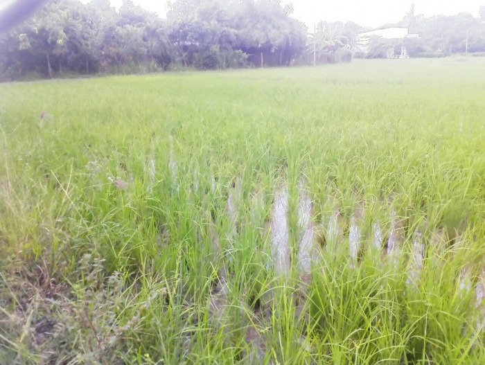 Bán gấp 2000 m2 đất mặt tiền đường liên ấp 2,3,4 xã Tân Quý Tây, Bình Chánh