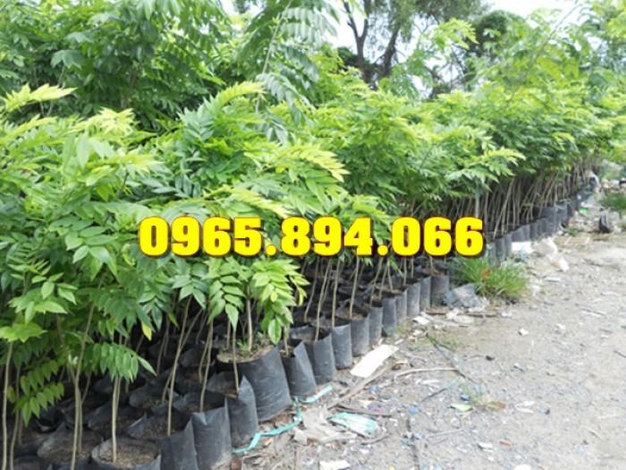 Cung cấp, bán giống cây Sưa Đỏ, Sưa Trắng, Cây Đào Tiên, Giống Nhót Ngọt11