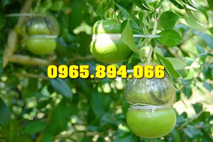 Cung cấp, bán giống cây Sưa Đỏ, Sưa Trắng, Cây Đào Tiên, Giống Nhót Ngọt7