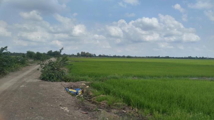 Bán đất nông nghiệp huyện hóc môn giá rẻ 450km2