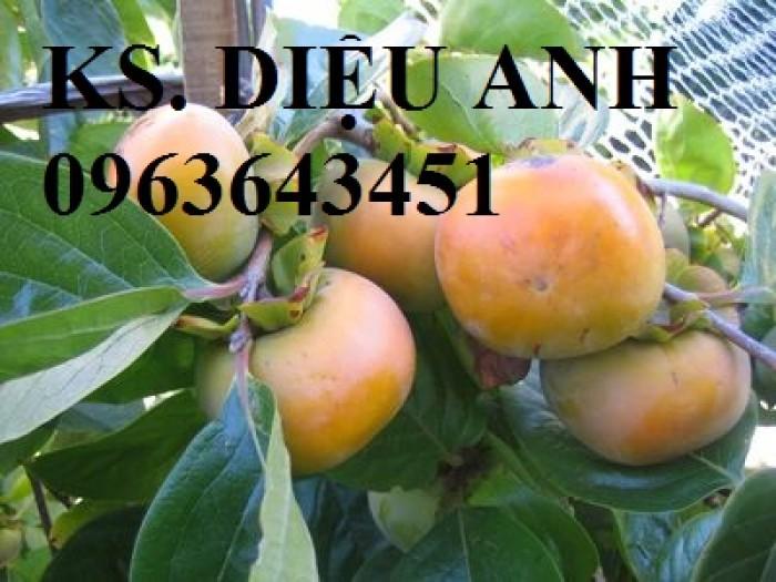 Địa chỉ bán cây giống hồng giòn Nhật Bản Fuyu, hồng không hạt, hồng nhân hậu, hồng bảo lâm chuẩn, uy tín8