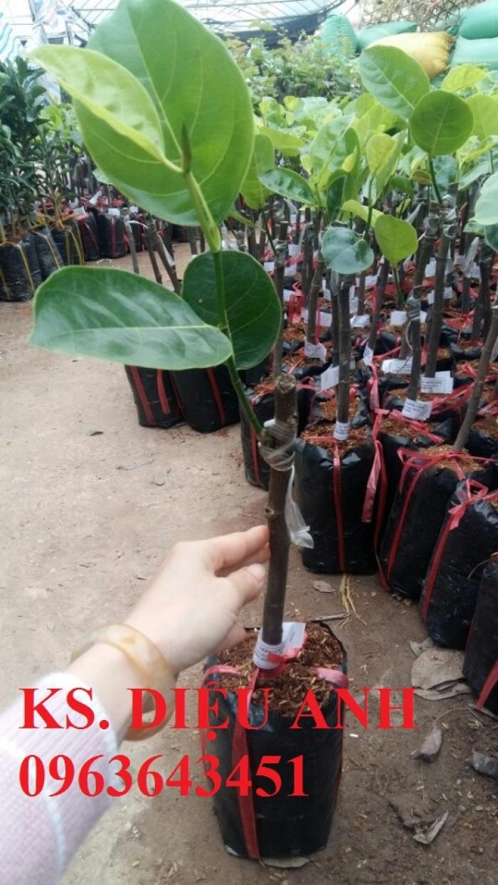 Địa chỉ bán cây giống mít Thái siêu sớm tứ quý, mít changai da xanh, mít  lá bàng, mít tứ quý chuẩn, uy tín11