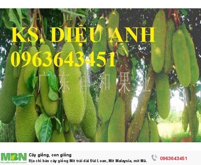 Địa chỉ bán cây giống Mít trái dài Đài Loan, Mít Malaysia, mít Mã Lai0