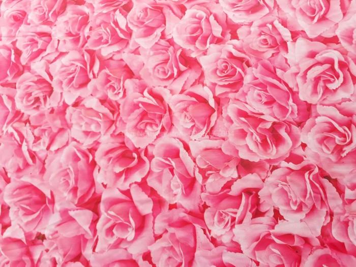 phông nền chụp ảnh hoa hồng1