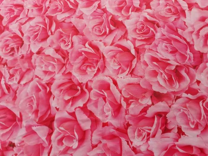 phông nền chụp ảnh hoa hồng0