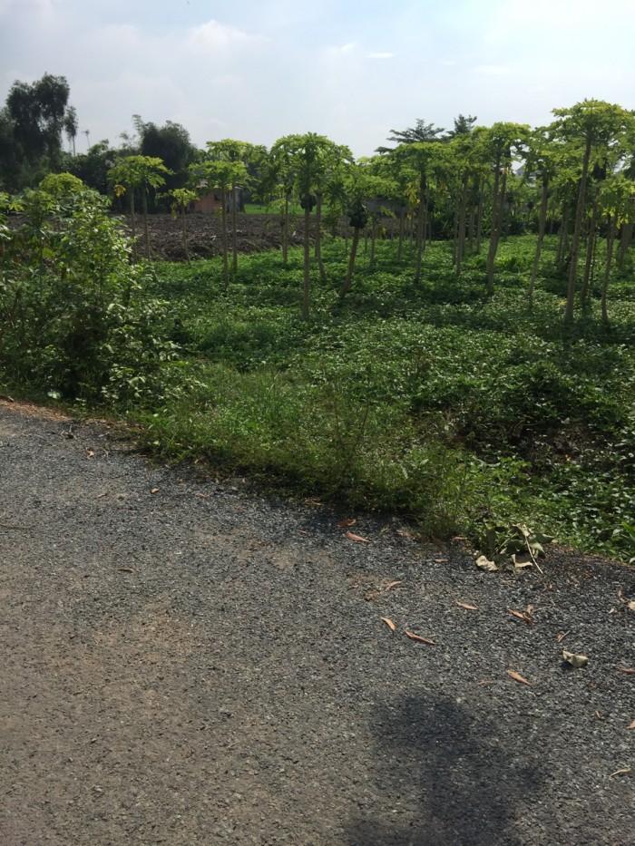 Đất Rẻ Tại Đa Phước, Bình Chánh, TP HCM.