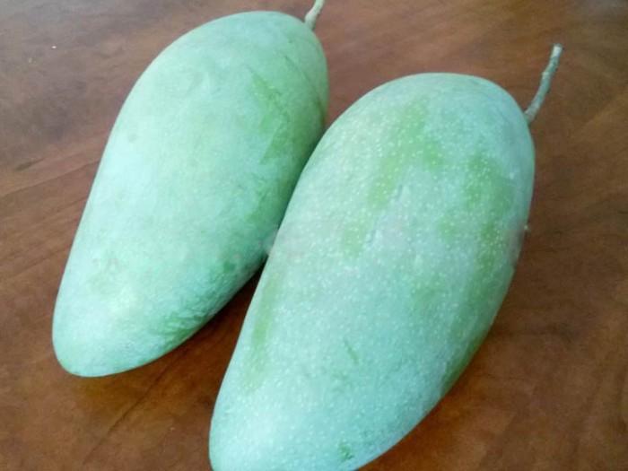 Chuyên cung cấp các loại cây ăn quả,giống xoài thái chất lượng cao5