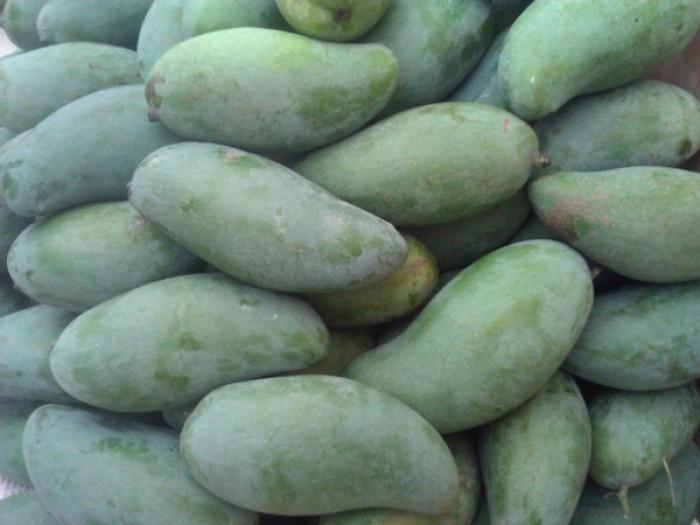 Chuyên cung cấp các loại cây ăn quả,giống xoài thái chất lượng cao0