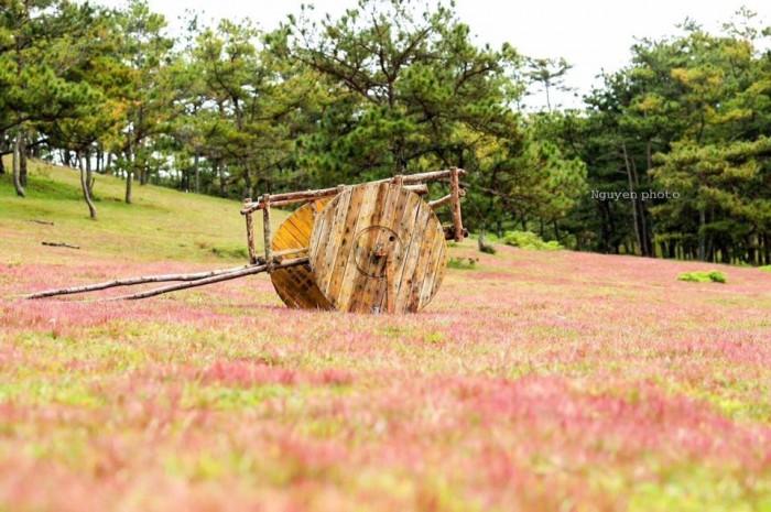 Đồi cỏ hồng hồ đan - kia: hình ảnh mới nhất vào ngày 8/11/2017