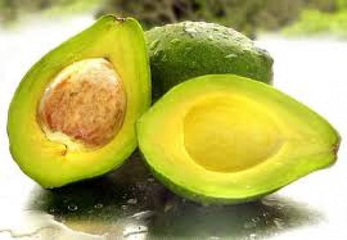 Cung cấp các loại giống cây ăn quả, giống cây bơ sáp số lượng lớn4