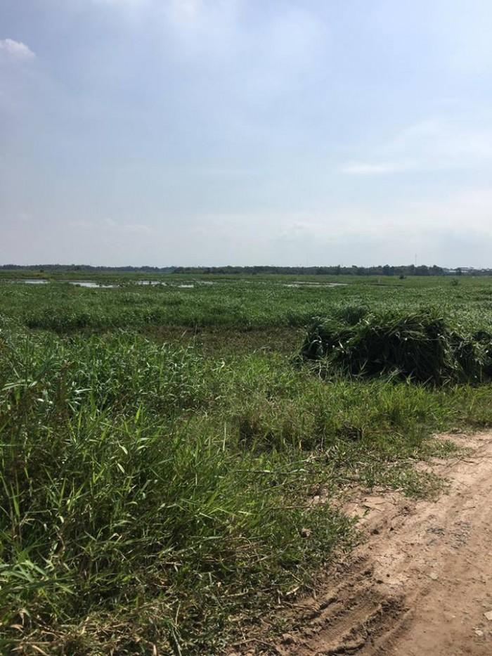 Bán đất củ chi giá rẻ gần chợ sáng tân thạnh Đông dt,3550m2 sổ Hồng riêng