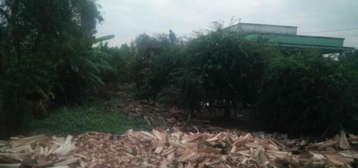 Đất Mặt Tiền Tân Liêm, Bình Chánh 271m2 thổ cư, kinh doanh thuận tiện