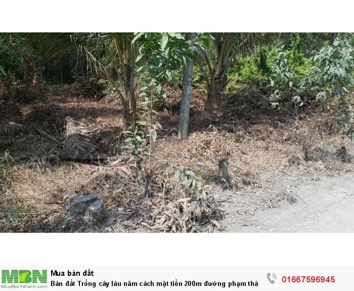 Bán đất Trồng cây lâu năm cách mặt tiền 200m đường phạm thái bường phước khánh nhơn trạch 919m2