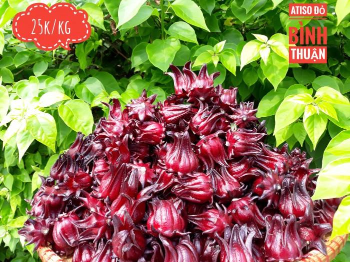 Hoa bụp giấm/ atiso đỏ tươi5