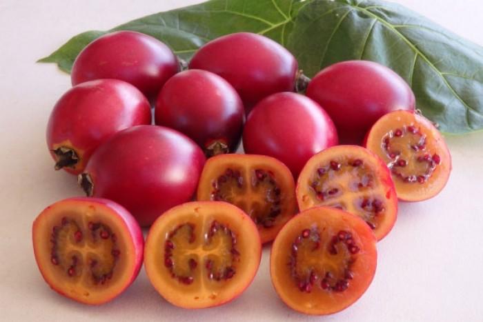 Địa chỉ cung cấp giống cây cà chua thân gỗ uy tín, chất lượng10