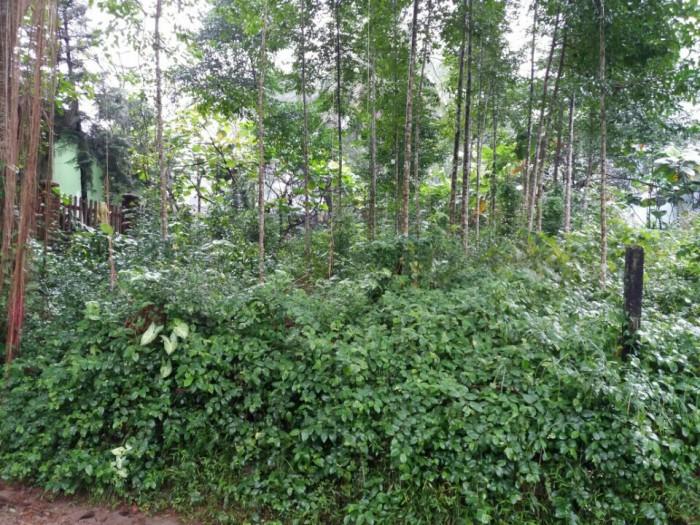 Bán đất thổ cư giá rẻ tại Vũ Ngọc Phan, Thủy Xuân, Huế Diện tích 300m2