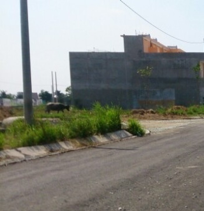 2 lô đất sổ riêng mặt tiền đường số 203 Bình Chánh