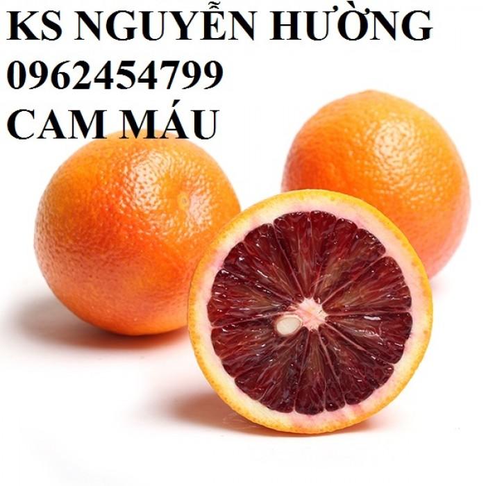 Bán giống cây cam cara ruột đỏ, cam máu hàng chuẩn giống f1 - hàng chuẩn giống f10