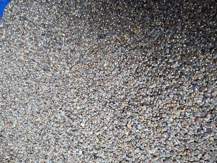 Hạt giống cây cải tạo đất .cốt khí điền thanh Mới 100%, giá: 120.000đ, gọi:  0398262626, Sơn Dương - Tuyên Quang, id-677e1000
