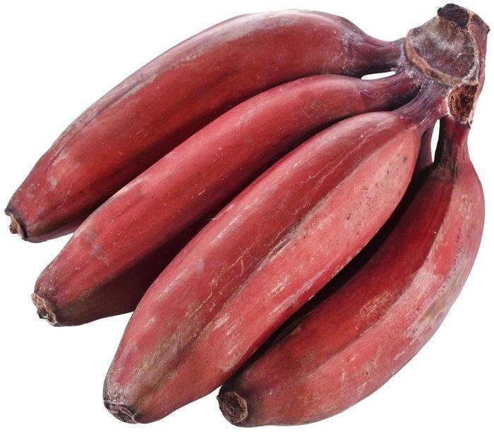 Cung cấp giống chuối cấy mô, chuối già, chuối laba, chuối tây ...9